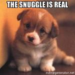Click image for larger version  Name:the-snuggle-is-real.jpg Views:7 Size:89.0 KB ID:133165